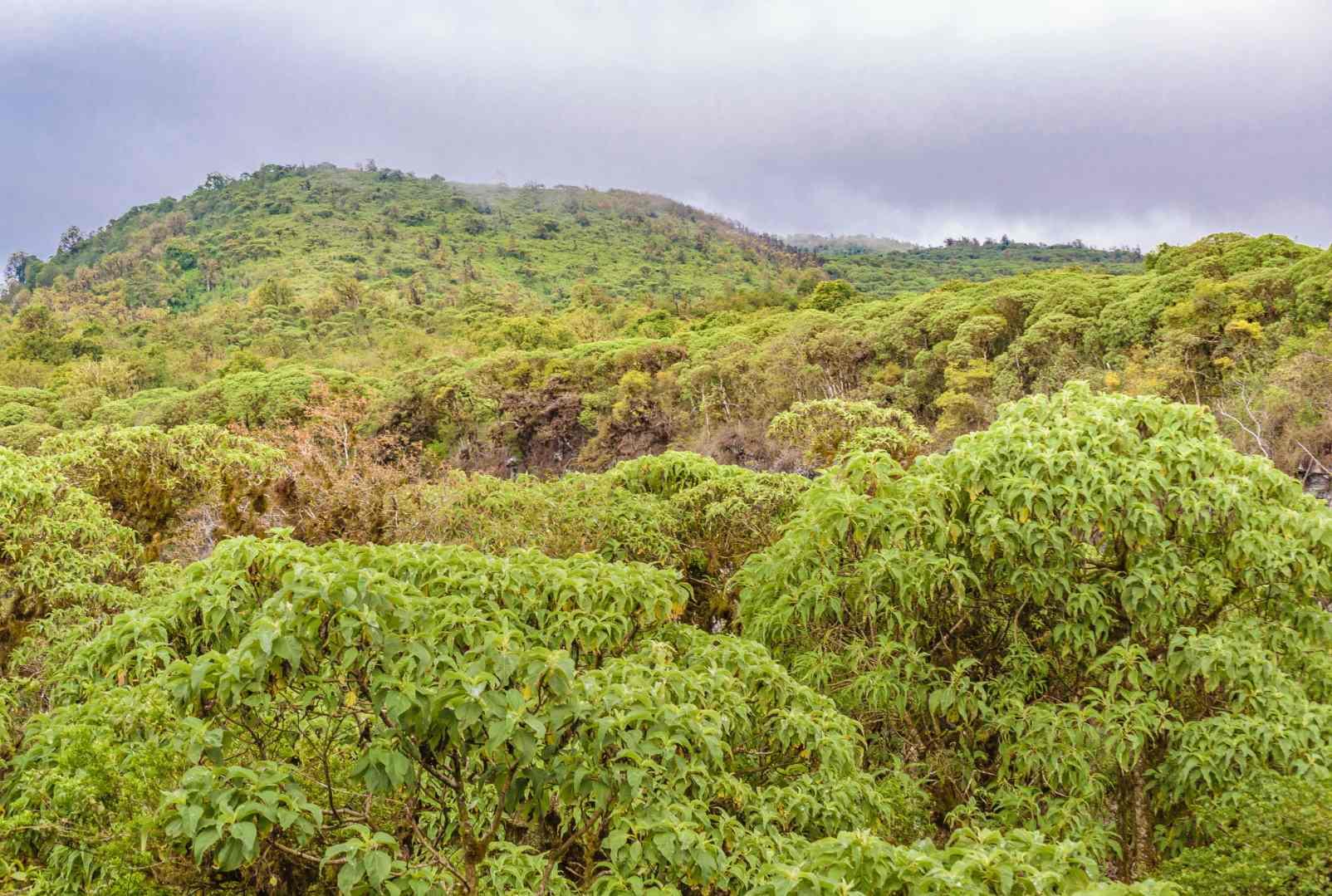 La Facturación Electrónica en Ecuador está salvando los bosques